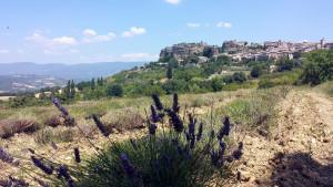 abgeerntetes Lavandinfeld mit Blick auf Saignon
